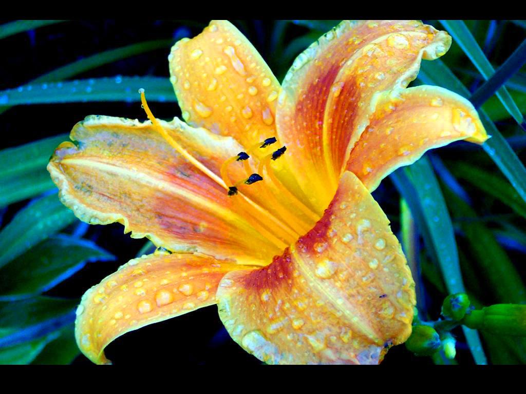 fleur7.jpg